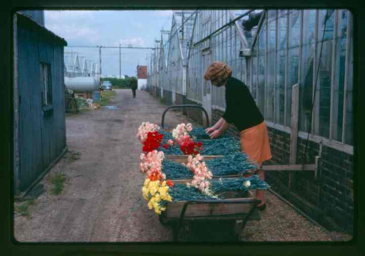Flowers on barrow 1964 web